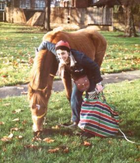 horses 83