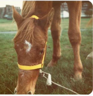 horses 830090